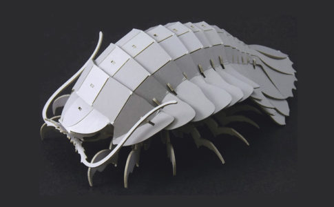 3Dペーパーパズル ダイオウグソクムシ